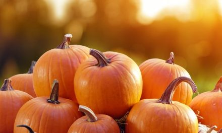 5 'Must See' Pumpkin Patches!